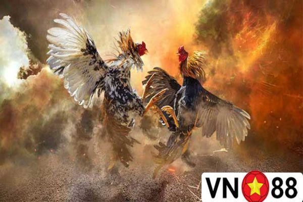 tham-gia-choi-game-da-ga-vn88-nhan-ngay-uu-dai-sieu-khung